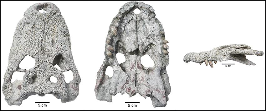 Vistas del cráneo