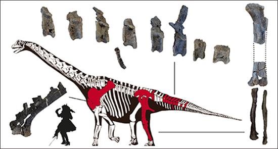 Esqueleto de Oceanotitan dantasi