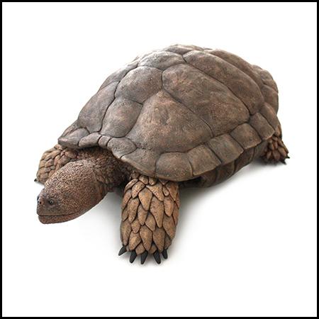 Un equipo de investigación liderado por la UNED describe una nueva tortuga primitiva del Cretácico de España